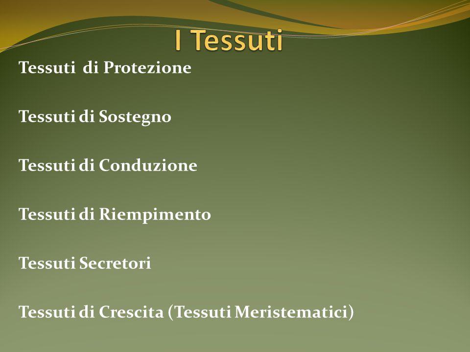 I Tessuti Tessuti di Protezione Tessuti di Sostegno