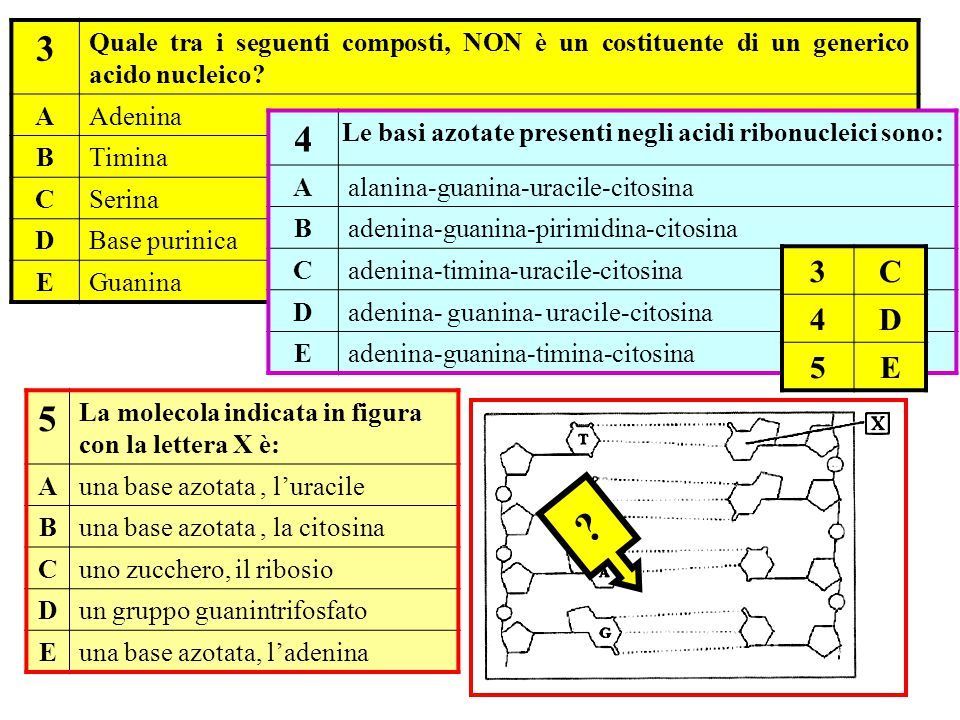 3 Quale tra i seguenti composti, NON è un costituente di un generico acido nucleico A. Adenina. B.