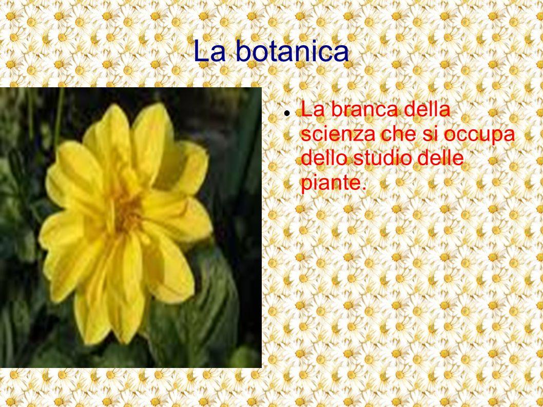 La botanica La branca della scienza che si occupa dello studio delle piante.