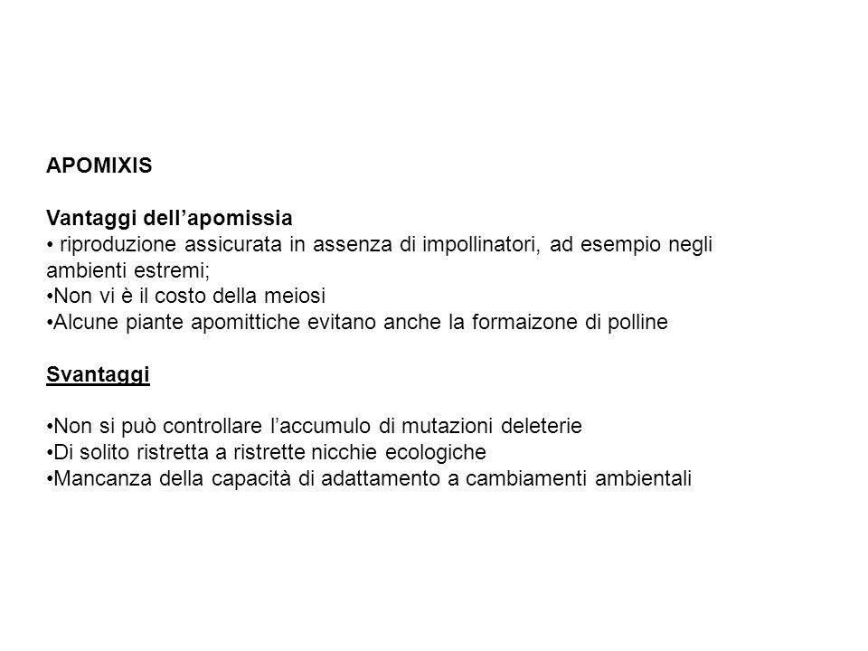 APOMIXIS Vantaggi dell'apomissia. riproduzione assicurata in assenza di impollinatori, ad esempio negli ambienti estremi;