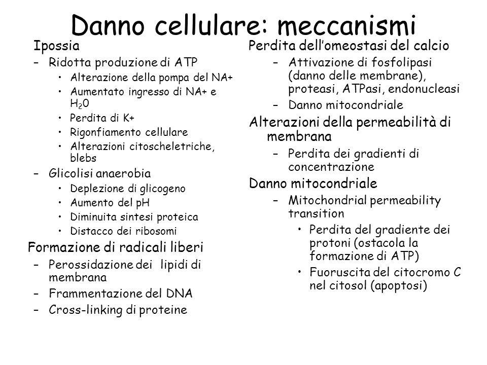 Danno cellulare: meccanismi