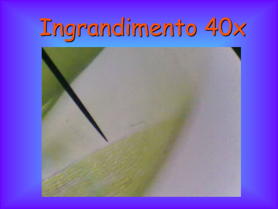 Ingrandimento 40x