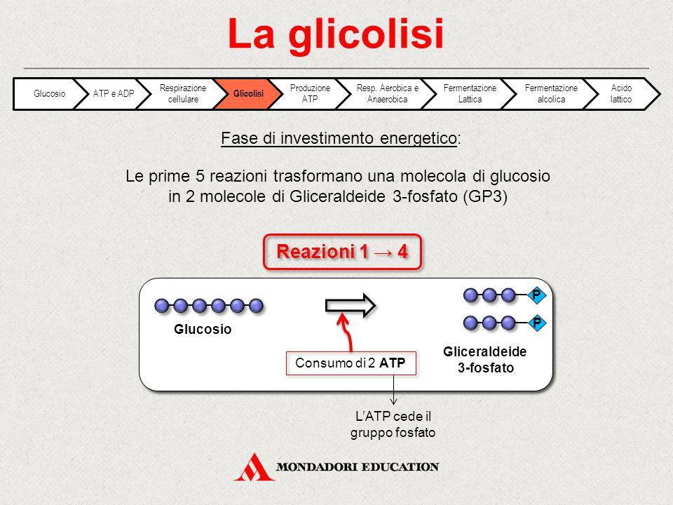 La glicolisi Reazioni 1 → 4 Fase di investimento energetico: