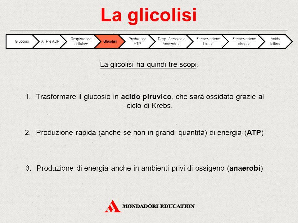 La glicolisi La glicolisi ha quindi tre scopi: