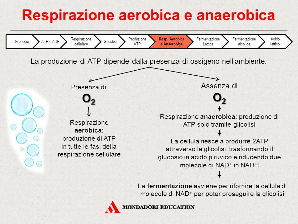 Respirazione aerobica e anaerobica