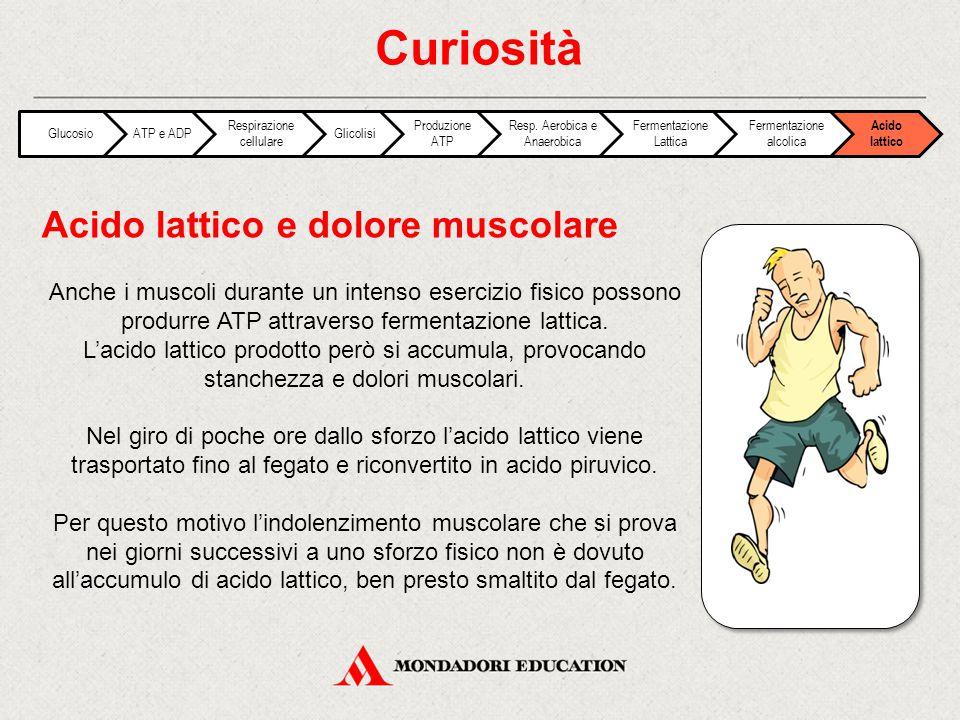Curiosità Acido lattico e dolore muscolare