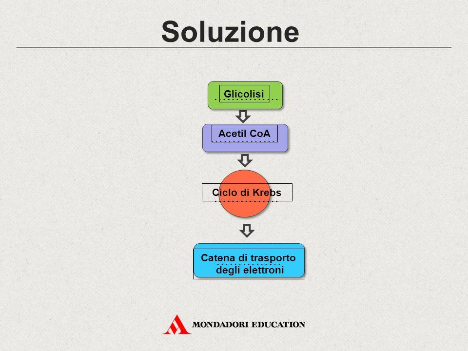 Soluzione …………… …………… …………… …………… Glicolisi Acetil CoA Ciclo di Krebs