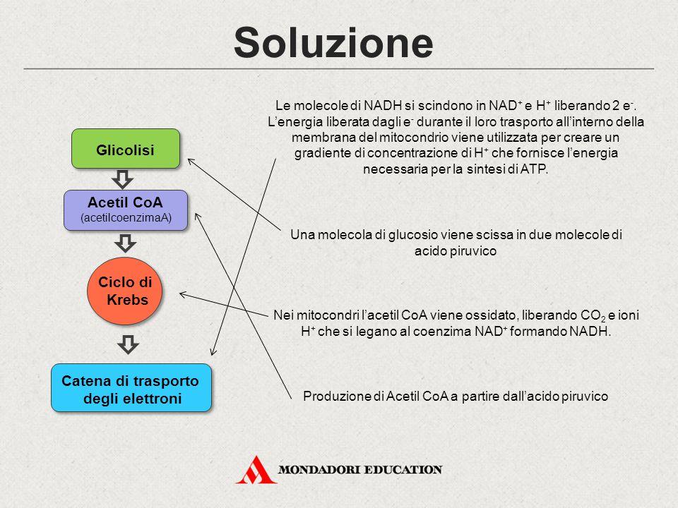 Soluzione Glicolisi Acetil CoA Ciclo di Krebs Catena di trasporto