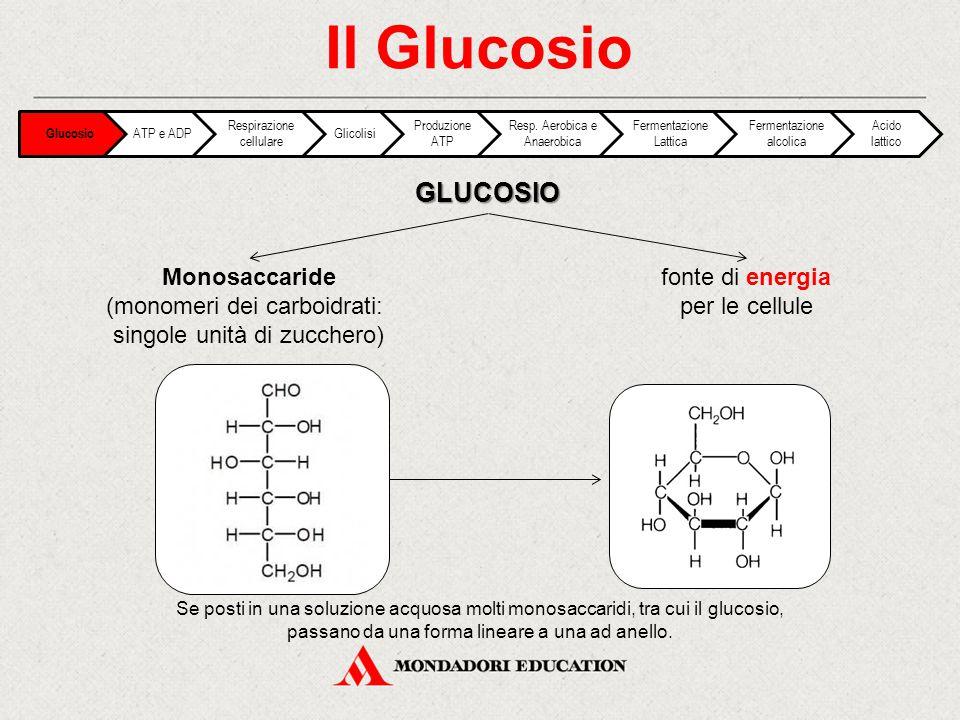 Il Glucosio GLUCOSIO Monosaccaride (monomeri dei carboidrati: