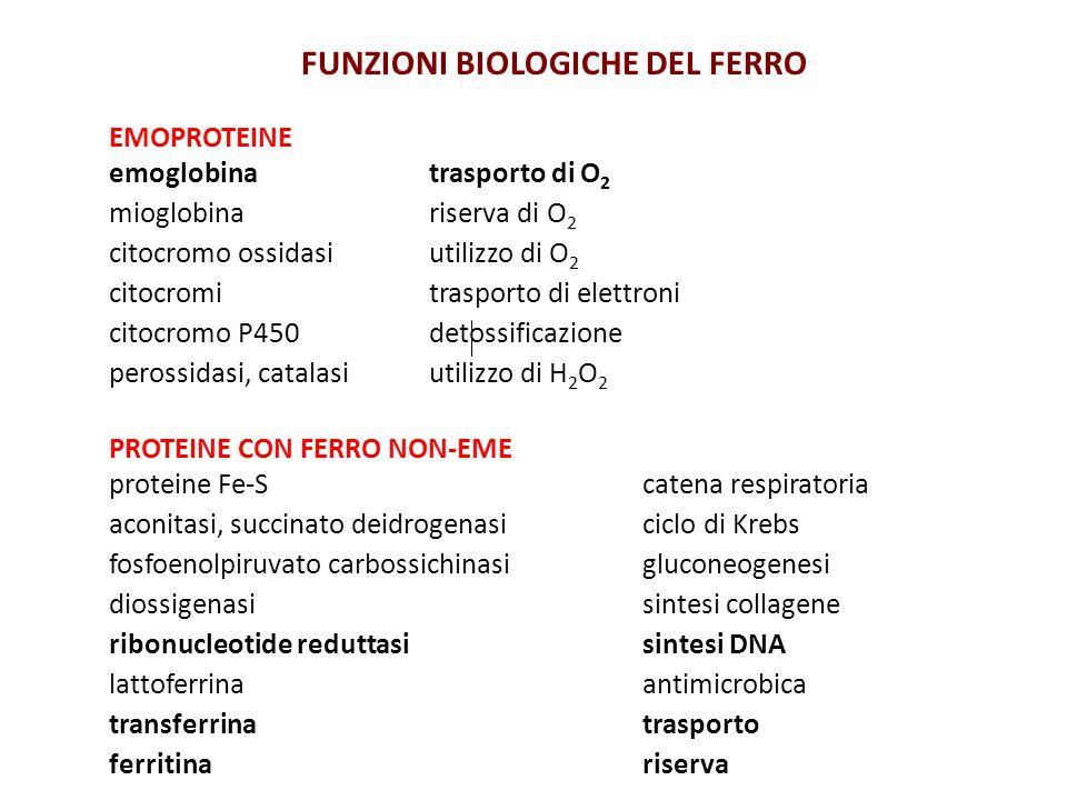 FUNZIONI BIOLOGICHE DEL FERRO