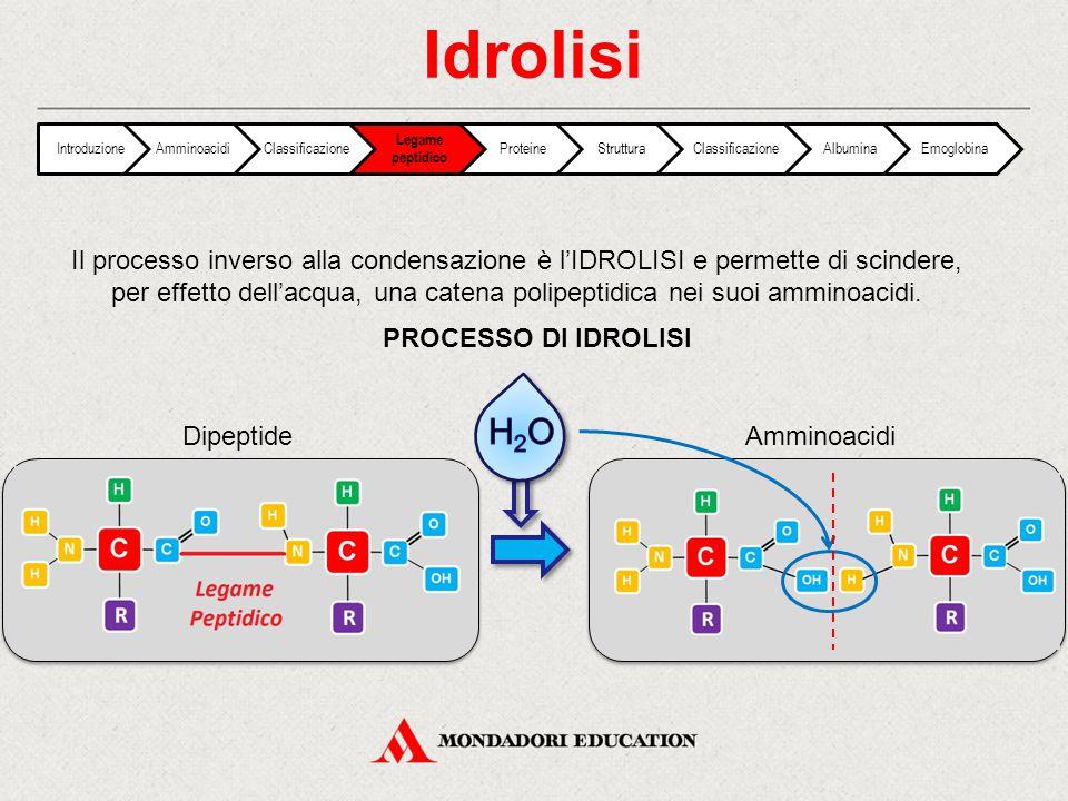 Idrolisi Introduzione. Amminoacidi. Classificazione. Legame peptidico. Proteine. Struttura. Albumina.