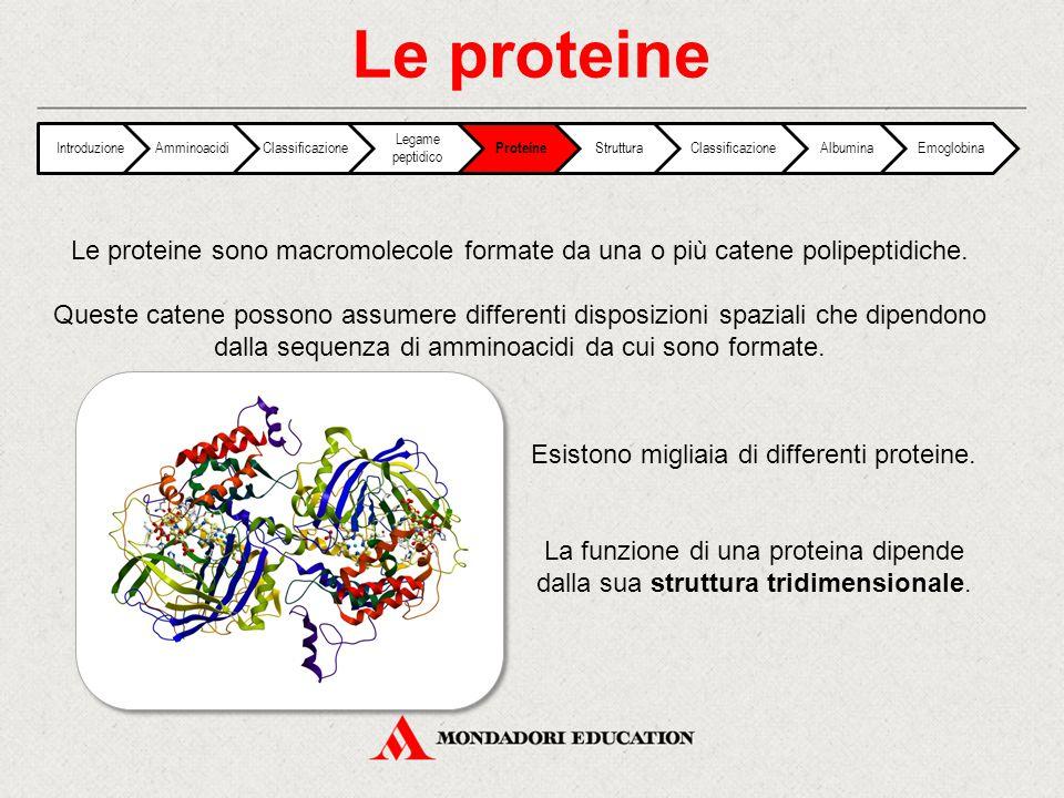 Esistono migliaia di differenti proteine.