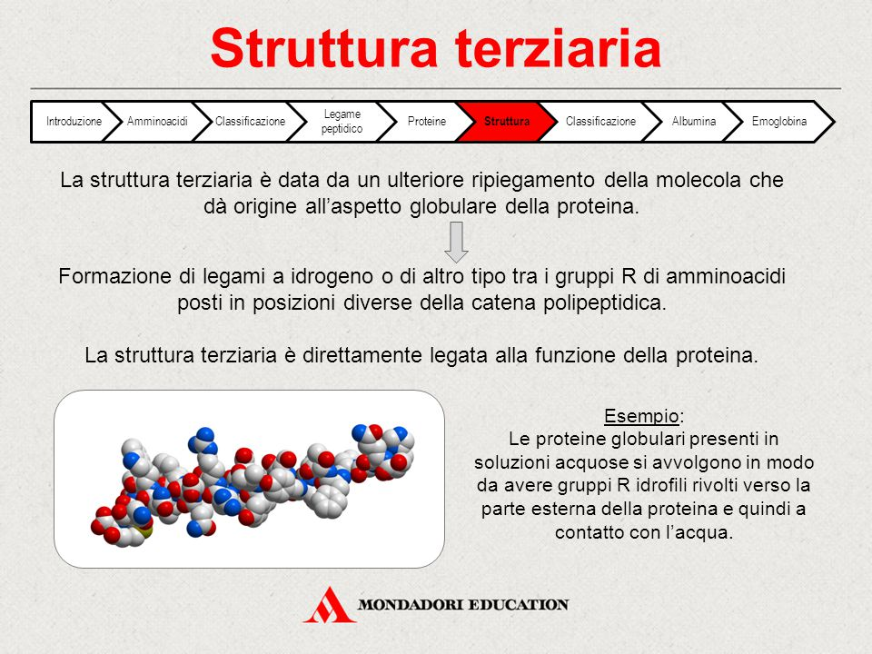 Struttura terziaria Introduzione. Amminoacidi. Classificazione. Legame peptidico. Proteine. Struttura.