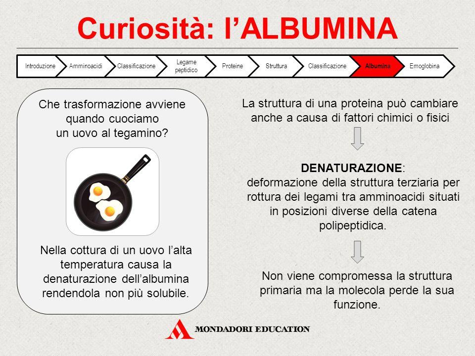 Curiosità: l'ALBUMINA