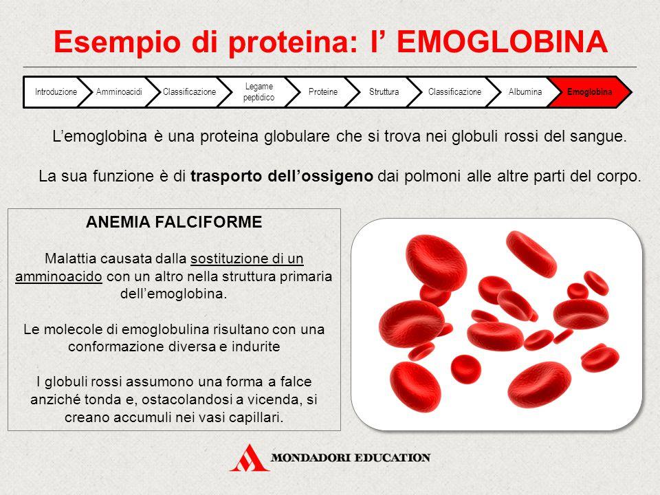 Esempio di proteina: l' EMOGLOBINA