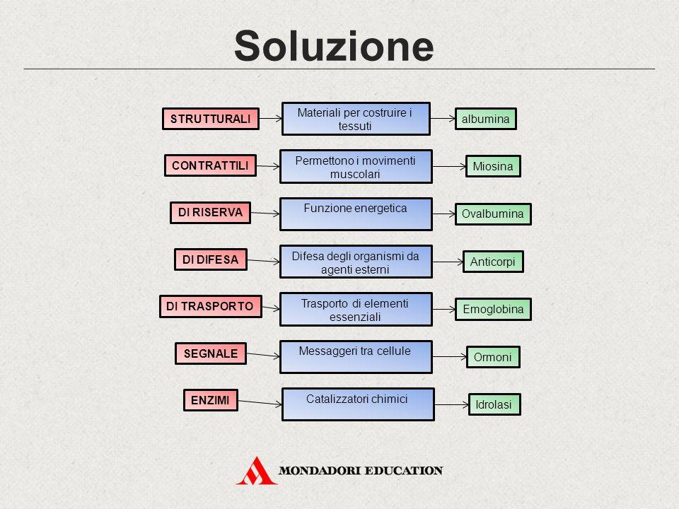 Soluzione Materiali per costruire i tessuti STRUTTURALI albumina
