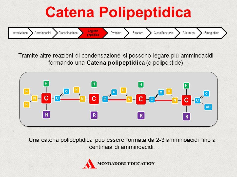 Catena Polipeptidica Introduzione. Amminoacidi. Classificazione. Legame peptidico. Proteine. Struttura.
