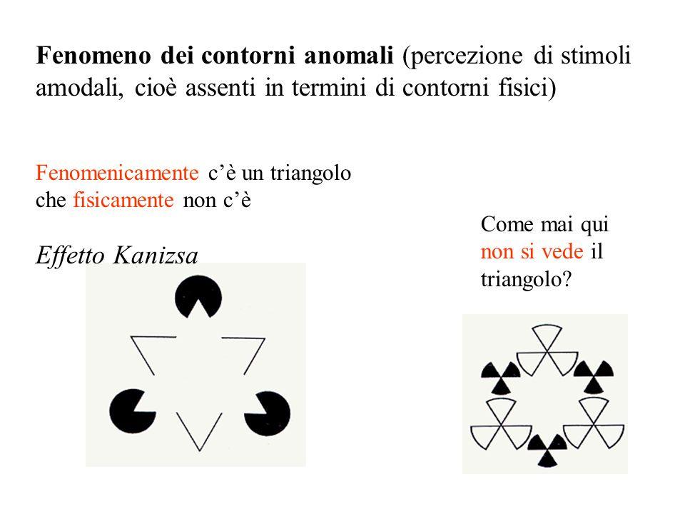 Fenomeno dei contorni anomali (percezione di stimoli amodali, cioè assenti in termini di contorni fisici)