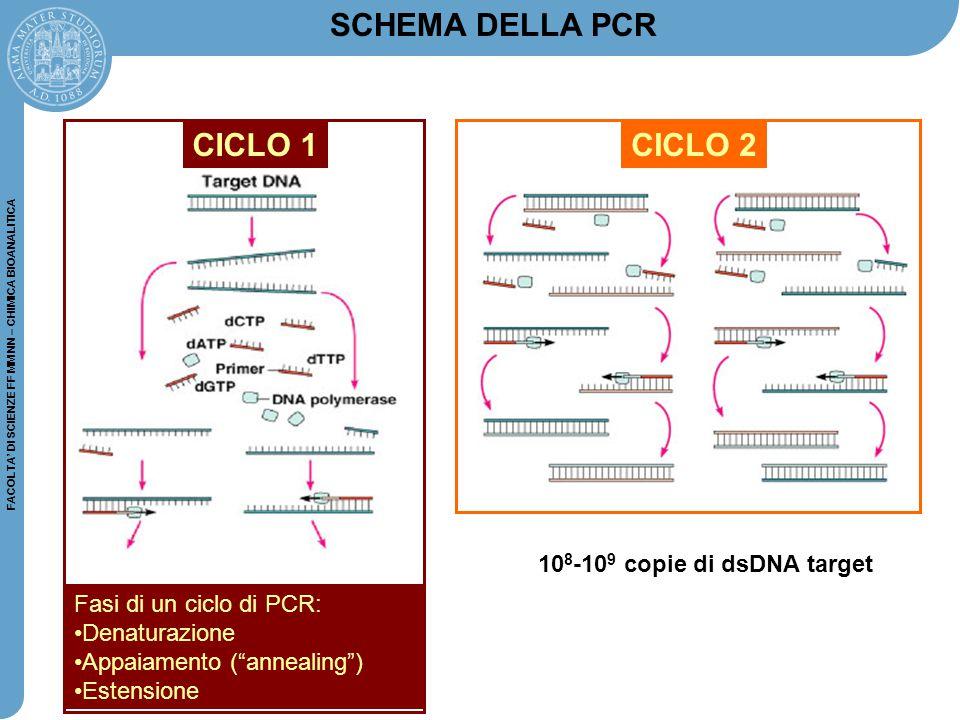 SCHEMA DELLA PCR CICLO 1 CICLO 2 108-109 copie di dsDNA target