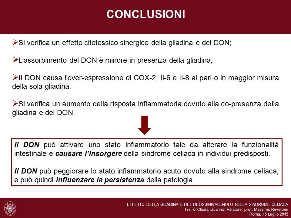 CONCLUSIONI Si verifica un effetto citotossico sinergico della gliadina e del DON; L'assorbimento del DON è minore in presenza della gliadina;