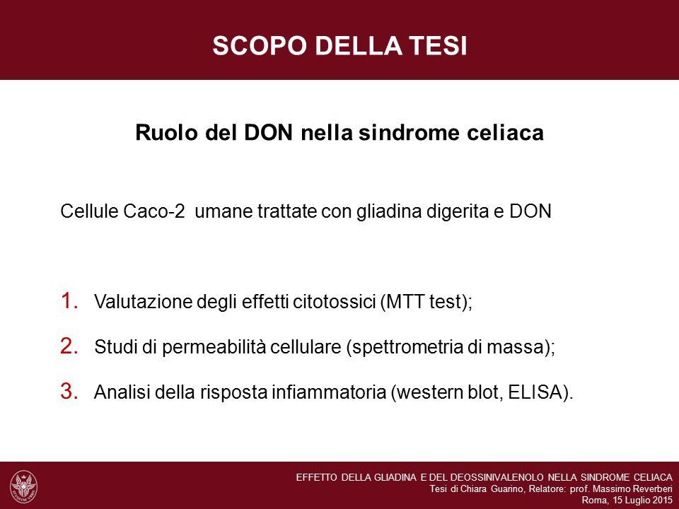 Ruolo del DON nella sindrome celiaca