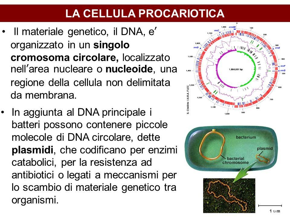 LA CELLULA PROCARIOTICA