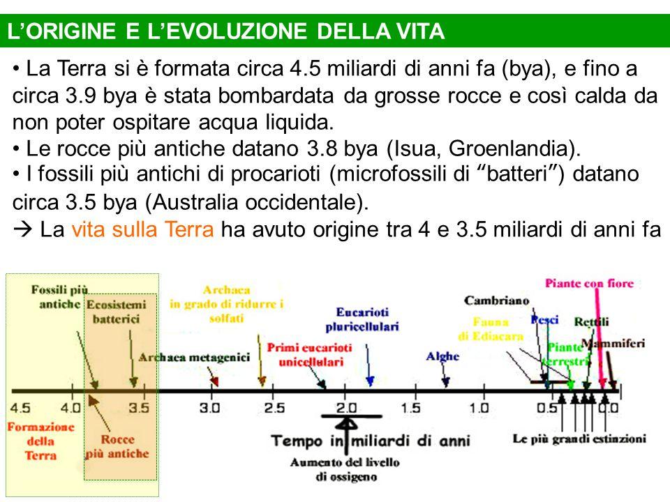 L'ORIGINE E L'EVOLUZIONE DELLA VITA