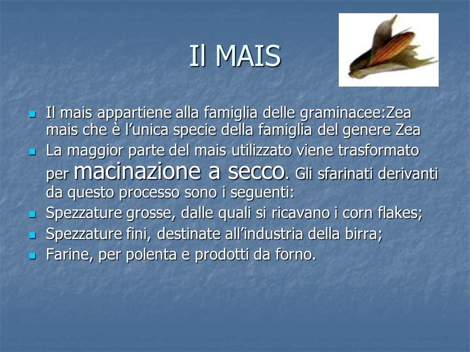 Il MAIS Il mais appartiene alla famiglia delle graminacee:Zea mais che è l'unica specie della famiglia del genere Zea.