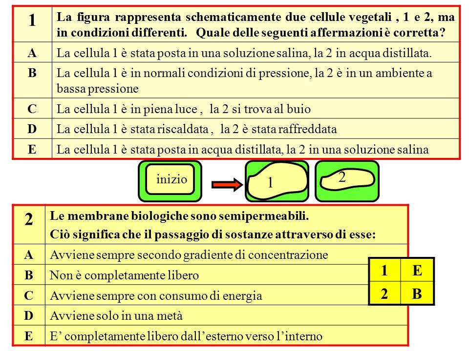 1 La figura rappresenta schematicamente due cellule vegetali , 1 e 2, ma in condizioni differenti. Quale delle seguenti affermazioni è corretta
