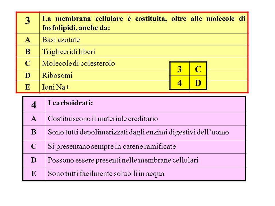 3 La membrana cellulare è costituita, oltre alle molecole di fosfolipidi, anche da: A. Basi azotate.