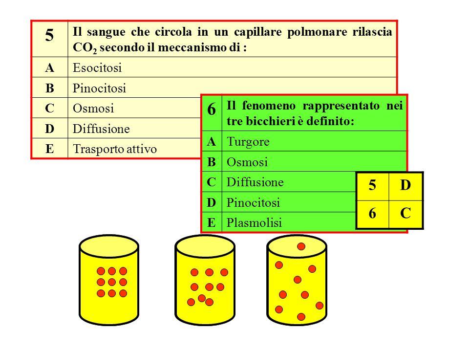5 Il sangue che circola in un capillare polmonare rilascia CO2 secondo il meccanismo di : A. Esocitosi.