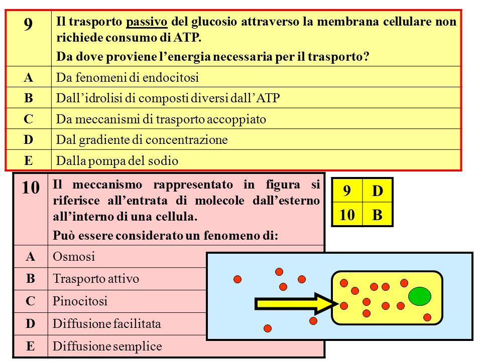 9 Il trasporto passivo del glucosio attraverso la membrana cellulare non richiede consumo di ATP.