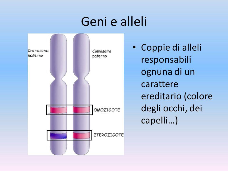 Geni e alleli Coppie di alleli responsabili ognuna di un carattere ereditario (colore degli occhi, dei capelli…)
