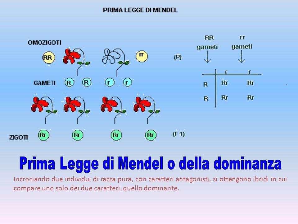 Prima Legge di Mendel o della dominanza
