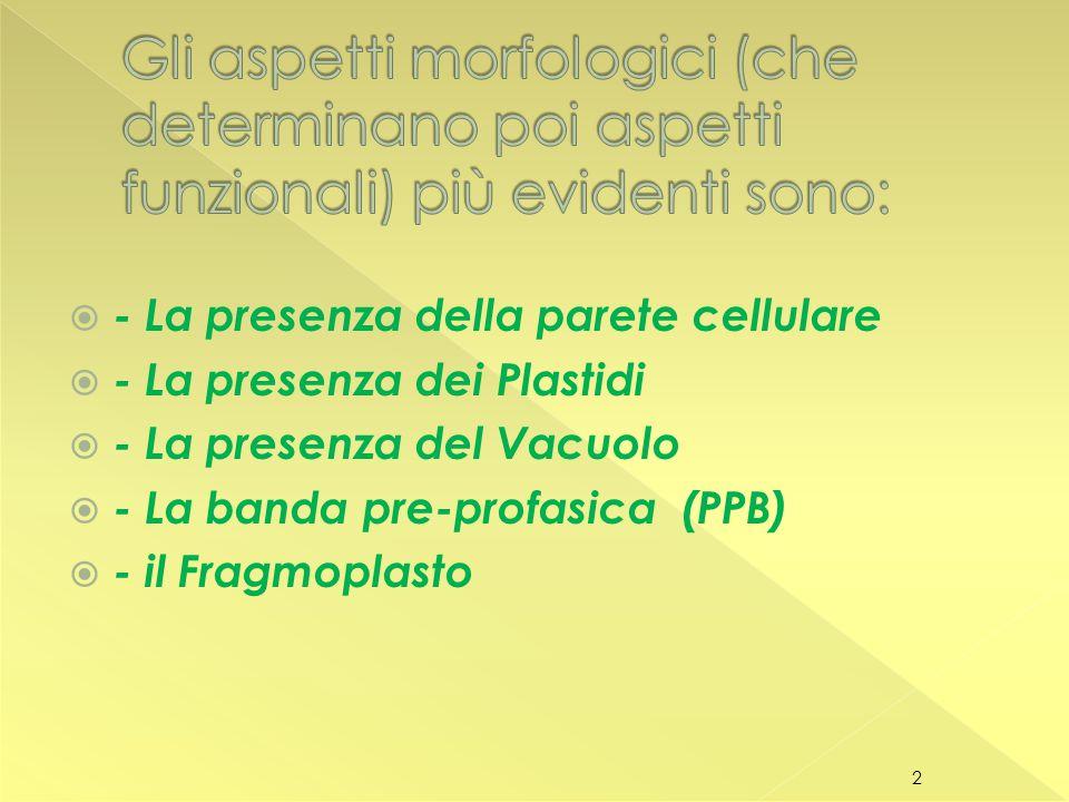 Gli aspetti morfologici (che determinano poi aspetti funzionali) più evidenti sono: