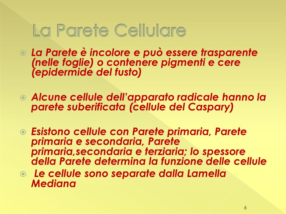 La Parete Cellulare La Parete è incolore e può essere trasparente (nelle foglie) o contenere pigmenti e cere (epidermide del fusto)