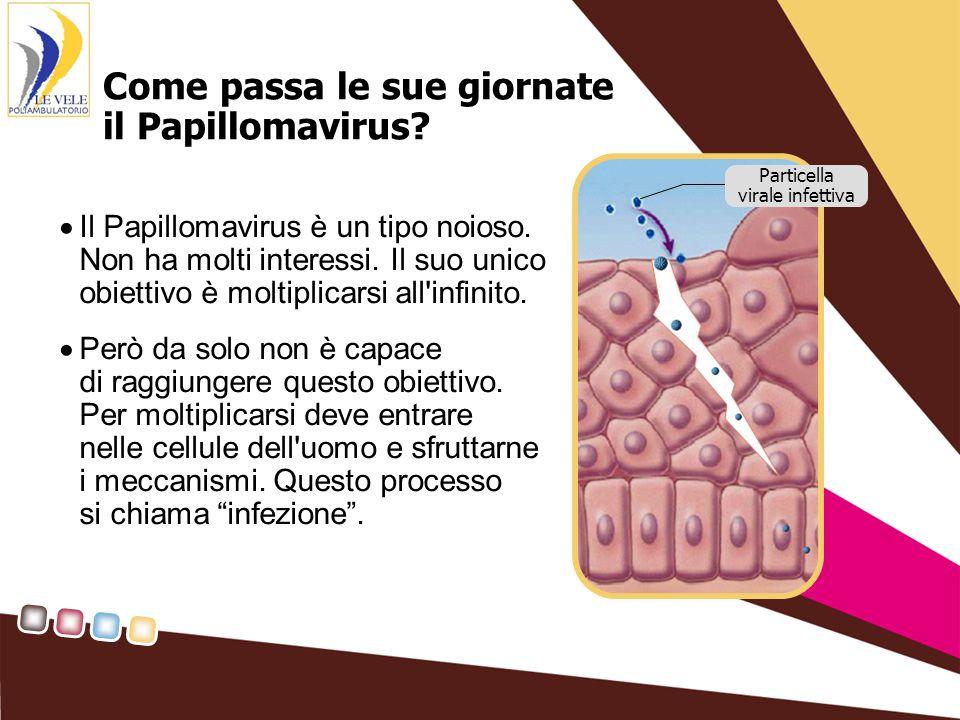 Come passa le sue giornate il Papillomavirus