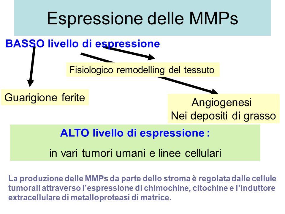 Espressione delle MMPs