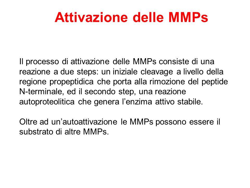 Attivazione delle MMPs