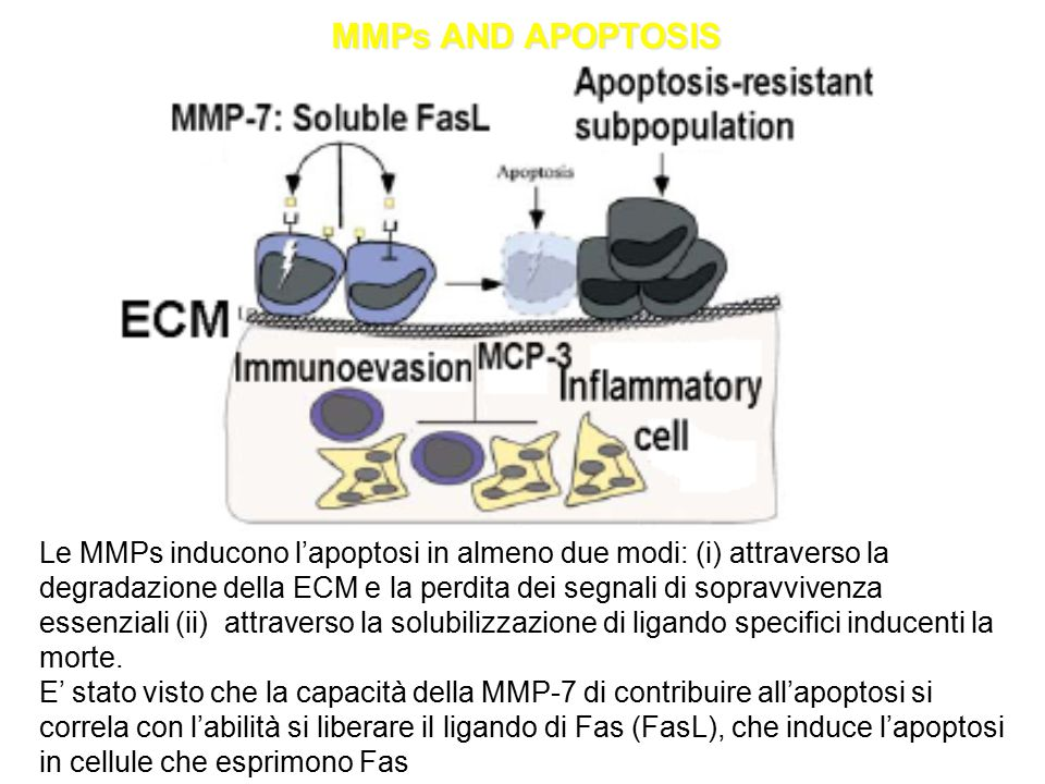 MMPs AND APOPTOSIS