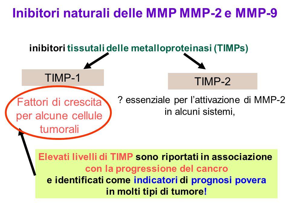 Inibitori naturali delle MMP MMP-2 e MMP-9