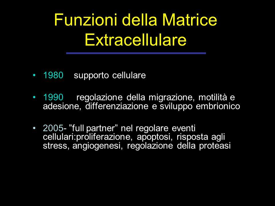Funzioni della Matrice Extracellulare