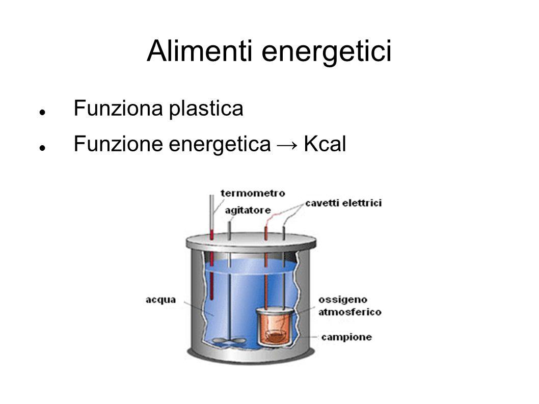 Alimenti energetici Funziona plastica Funzione energetica → Kcal