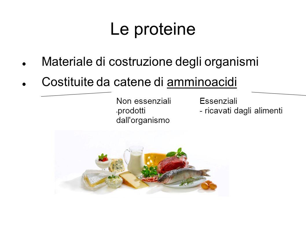Le proteine Materiale di costruzione degli organismi