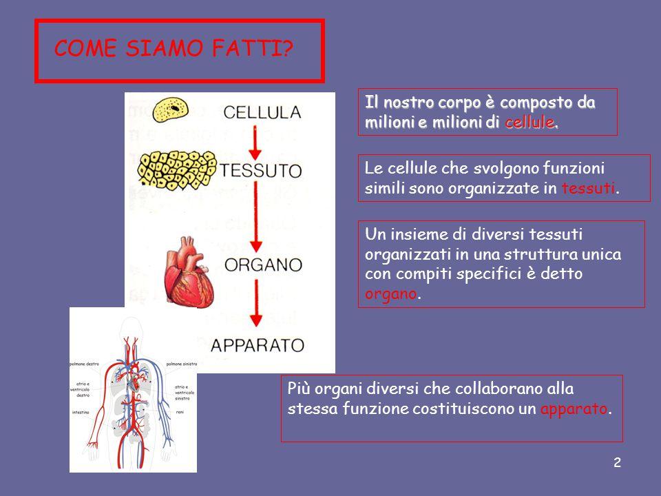 COME SIAMO FATTI Il nostro corpo è composto da milioni e milioni di cellule. Le cellule che svolgono funzioni simili sono organizzate in tessuti.
