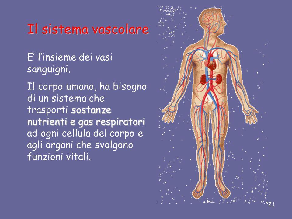 Il sistema vascolare E' l'insieme dei vasi sanguigni.