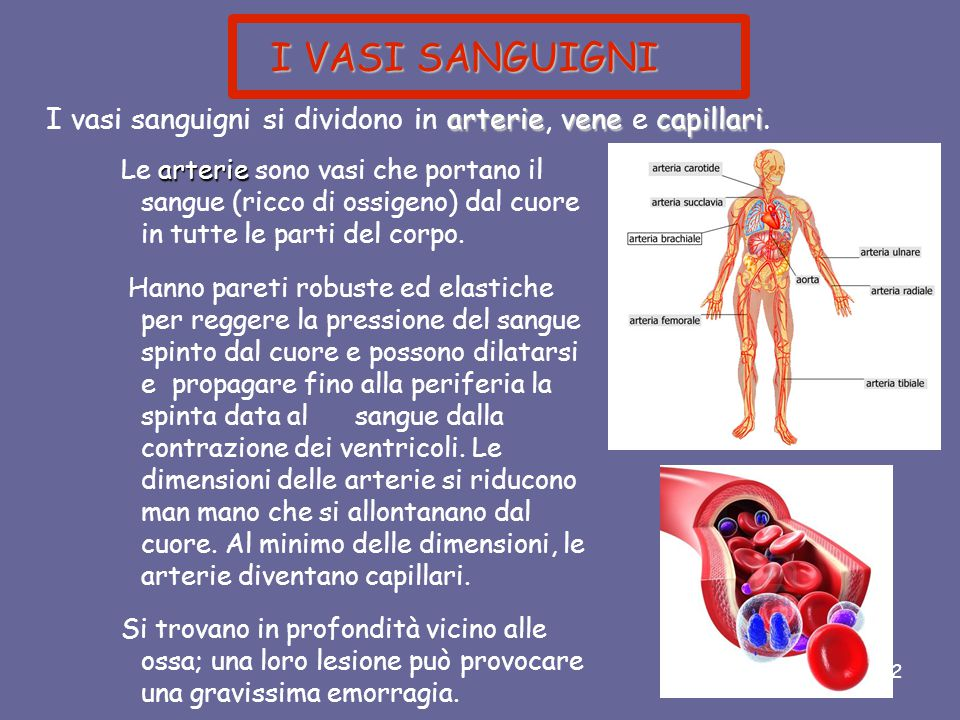 I VASI SANGUIGNI I vasi sanguigni si dividono in arterie, vene e capillari.