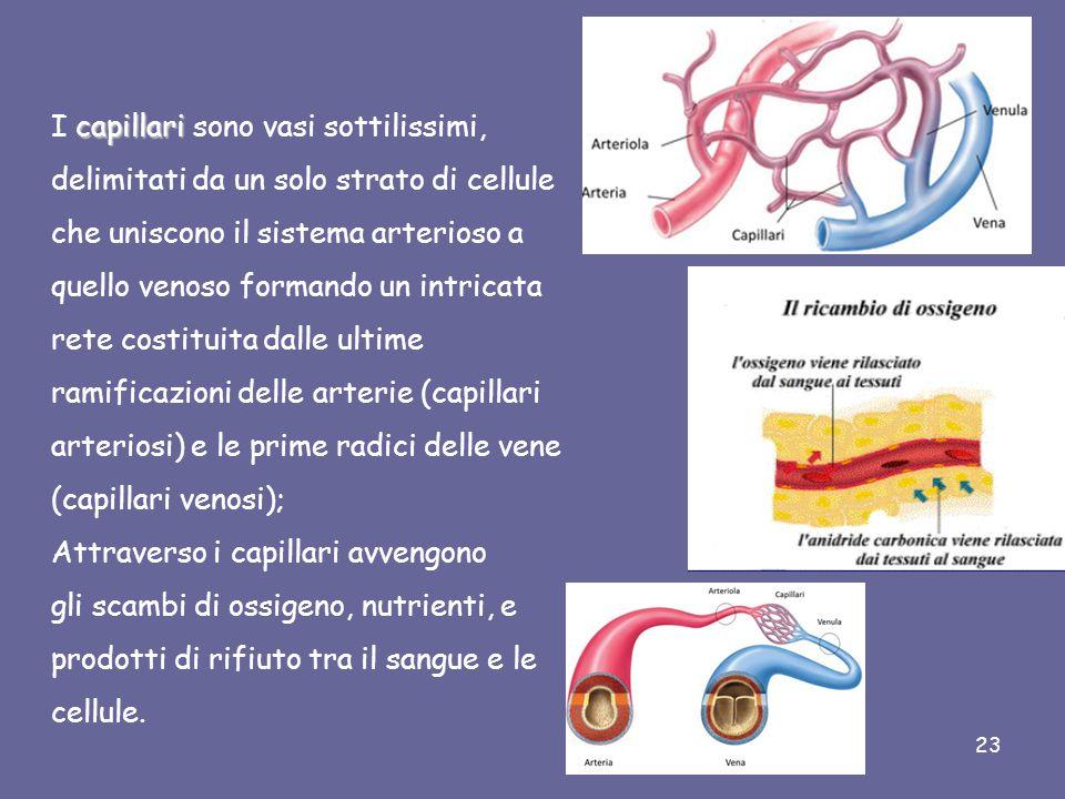 I capillari sono vasi sottilissimi,
