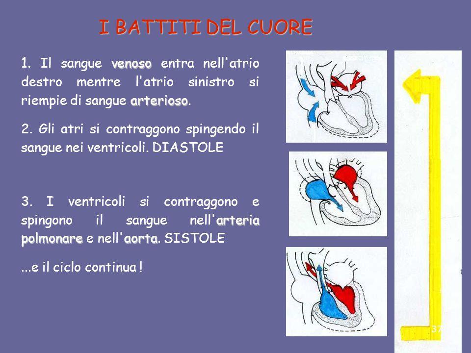 I BATTITI DEL CUORE 1. Il sangue venoso entra nell atrio destro mentre l atrio sinistro si riempie di sangue arterioso.