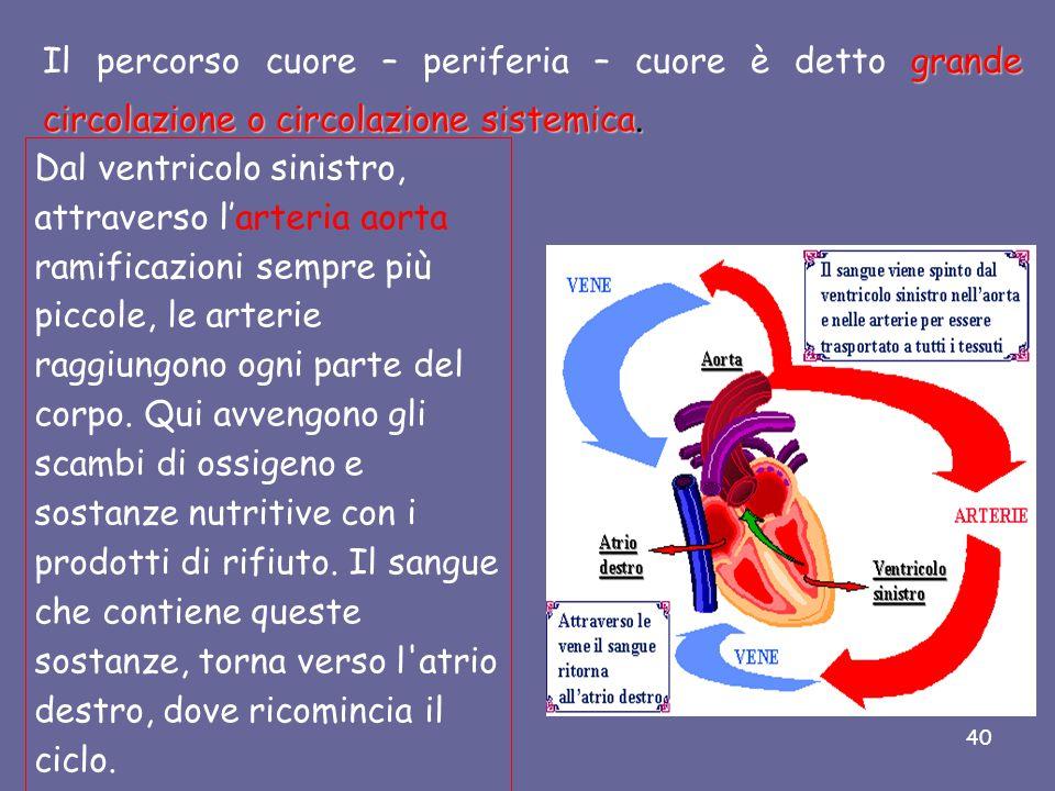 Il percorso cuore – periferia – cuore è detto grande circolazione o circolazione sistemica.